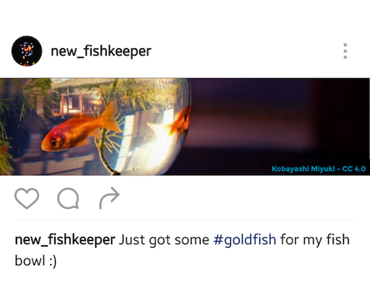 Fish in bowl on instagram